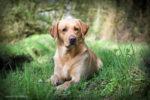 Dog Portrait Stirlingshire